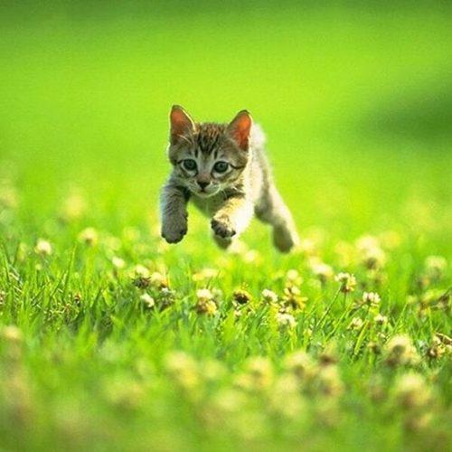 春わくわく猫ちゃん