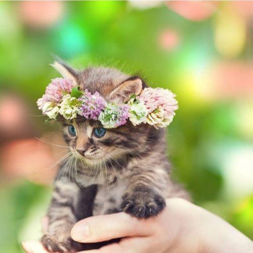 ネコちゃん花冠