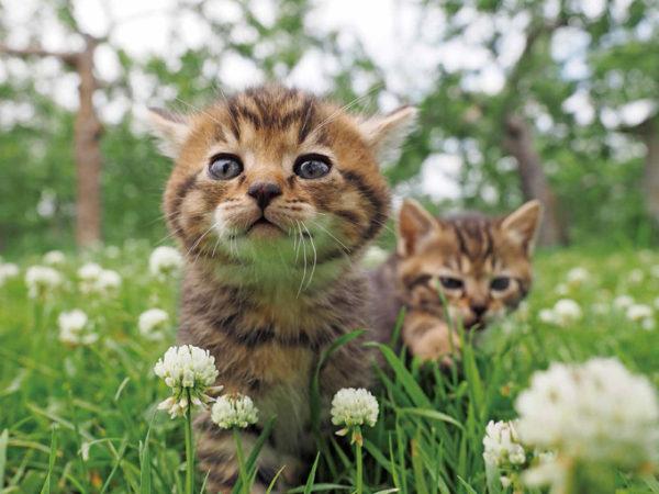 劇場版「岩合光昭の世界ネコ歩き」